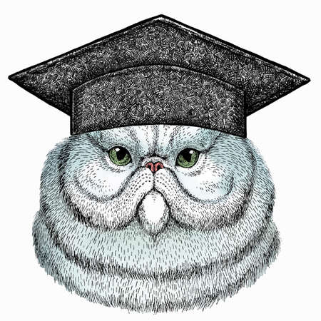 Portrait of persian cat. Square academic cap, graduate cap, cap, mortarboard. Vector cat head, face.