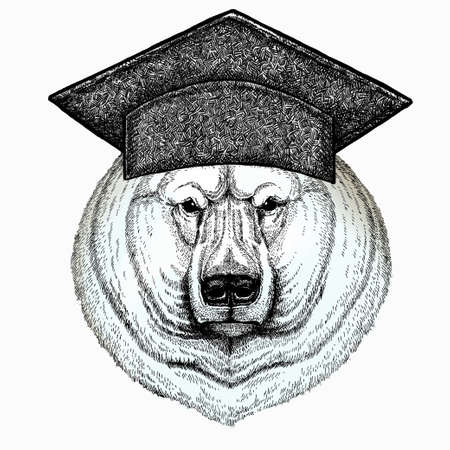 Polar bear head. Square academic cap, graduate cap, cap, mortarboard. Vector animal portrait. 免版税图像