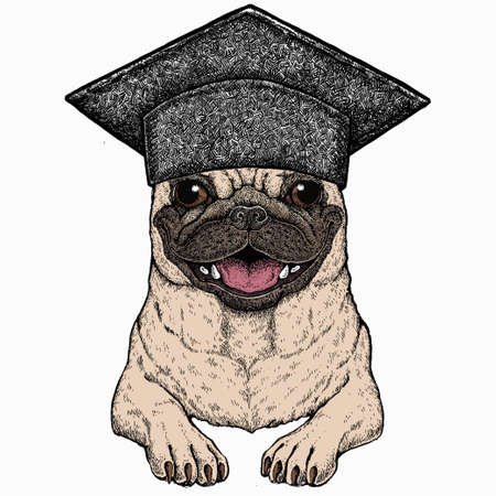 Vector pug, dog portrait. Square academic cap, graduate cap, cap, mortarboard. Animal head, face.