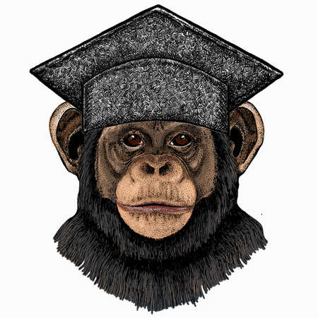 Vector chimpanzee portrait. Square academic cap, graduate cap, cap, mortarboard. Ape head, monkey face.