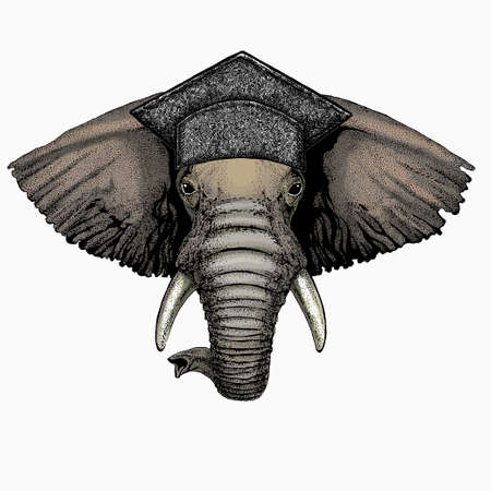 African elephant vector portrait. Square academic cap, graduate cap, cap, mortarboard. Animal face, head.