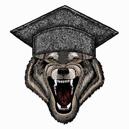 Vector portrait of wolf. Square academic cap, graduate cap, cap, mortarboard. Cool wild wolf. Animal head. 矢量图像