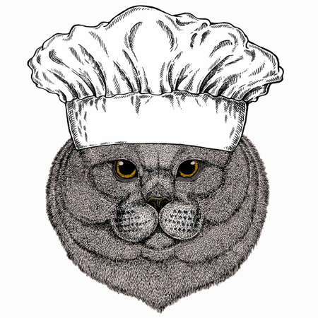 British shorthair cat animal cute face. Chef cook hat. Restaurant logo. Vector happy silver British kitten head portrait.