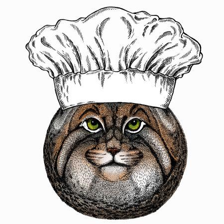 Pallass cat. Chef cook hat. Restaurant logo. Vector portrait, wild cat head, wild cat face. Logos