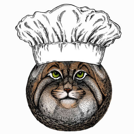 Pallass cat. Chef cook hat. Restaurant logo. Vector portrait, wild cat head, wild cat face.