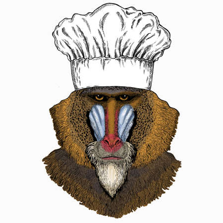 Baboon, monkey, ape. Chef cook hat. Restaurant logo. Vector portrait of wild animal.