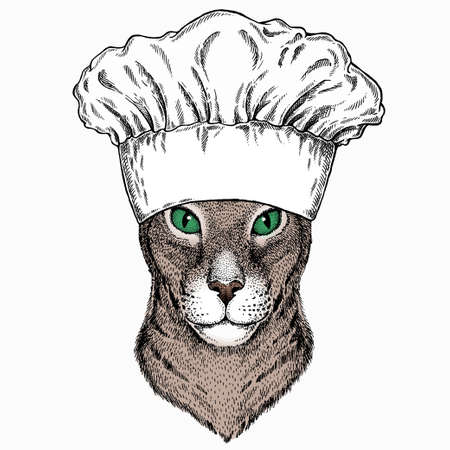 Oriental cat. Chef cook hat. Restaurant logo.