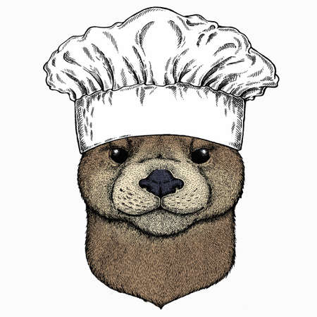 Vector portrait of otter. Chef cook hat. Restaurant logo. Head of wild animal.
