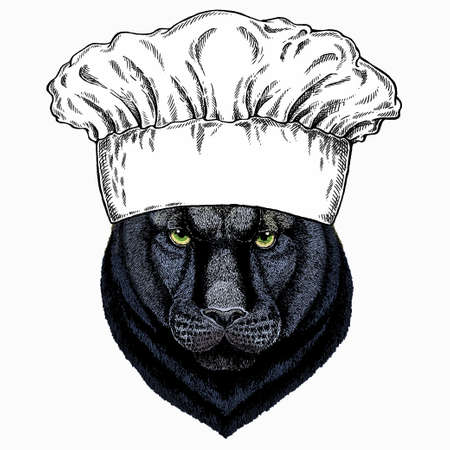 Black panther. Chef cook hat. Restaurant logo. Wild cat portrait.
