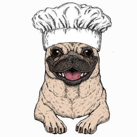 Vector pug, dog portrait. Chef cook hat. Restaurant logo. Animal head, face. 矢量图像