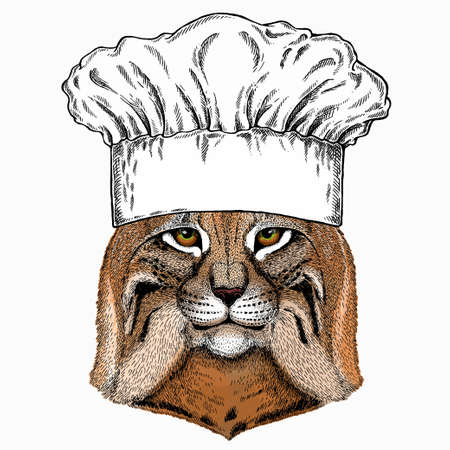 Lynx, bobcat. Chef cook hat. Restaurant logo. Wild cat. Vector portrait of cat head.