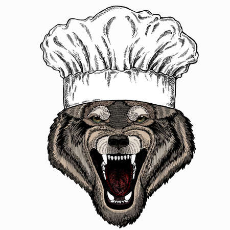 Vector portrait of wolf. Chef cook hat. Restaurant logo. Cool wild wolf. Animal head. 矢量图像
