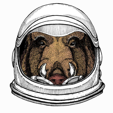 Wild boar, hog, pig. Animal head, portrait. Astronaut animal. Vector portrait. Cosmos and Spaceman. Space illustration about travel to the moon. Funny science hand drawn illustration.