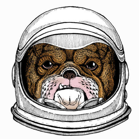 Bulldog portrait. Dog head. Animal face. Astronaut animal. Vector portrait. Cosmos and Spaceman. Space illustration about travel to the moon. Funny science hand drawn illustration. 矢量图像