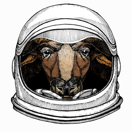 Buffalo Bison mascot head. Animal portrait. Astronaut animal. Vector portrait. Cosmos and Spaceman. Space illustration about travel to the moon. Funny science hand drawn illustration. 免版税图像