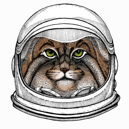 Pallass cat. Vector portrait, wild cat head, wild cat face. Astronaut animal. Vector portrait. Cosmos and Spaceman. Space illustration about travel to the moon. Funny science hand drawn illustration.