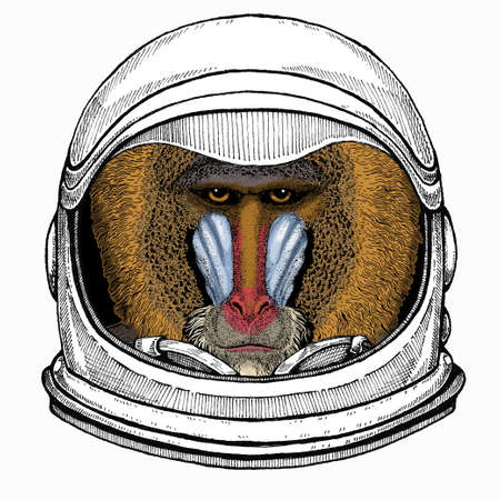 Baboon, monkey, ape. Vector portrait of wild animal. Astronaut animal. Vector portrait. Cosmos and Spaceman. Space illustration about travel to the moon. Funny science hand drawn illustration.