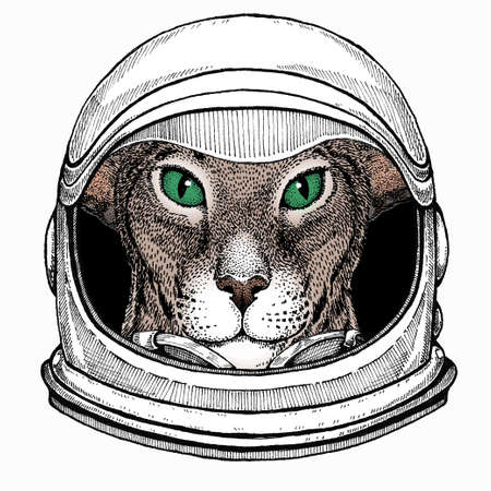 Oriental cat. Astronaut animal. Vector portrait. Cosmos and Spaceman. Space illustration about travel to the moon. Funny science hand drawn illustration.