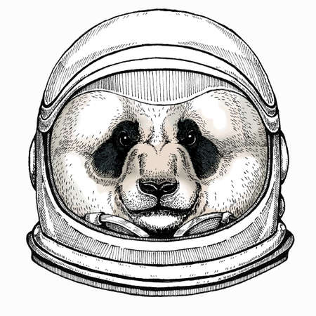 Panda, bamboo bear portrait. Head of big panda. Astronaut animal. Vector portrait. Cosmos and Spaceman. Space illustration about travel to the moon. Funny science hand drawn illustration.