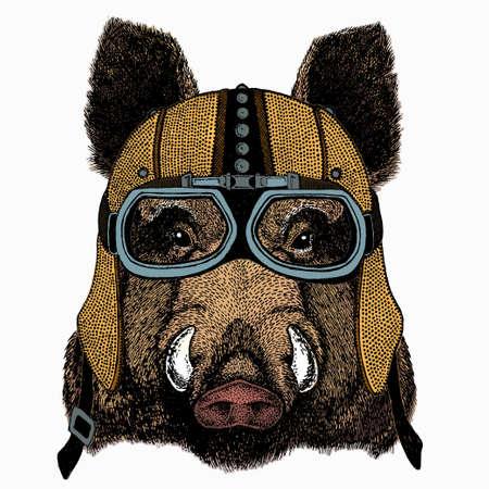 Wild boar, hog, pig. Animal head, portrait