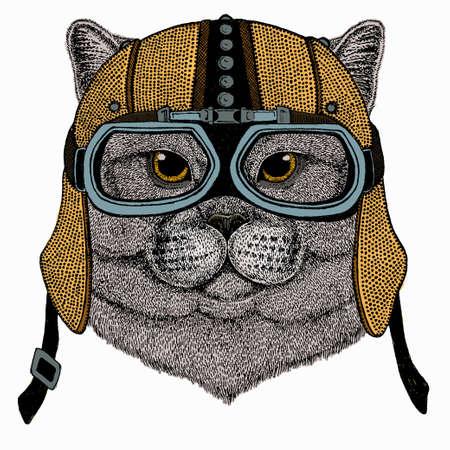 British shorthair cat animal cute face. Vector happy silver British kitten head portrait. 免版税图像 - 164282606