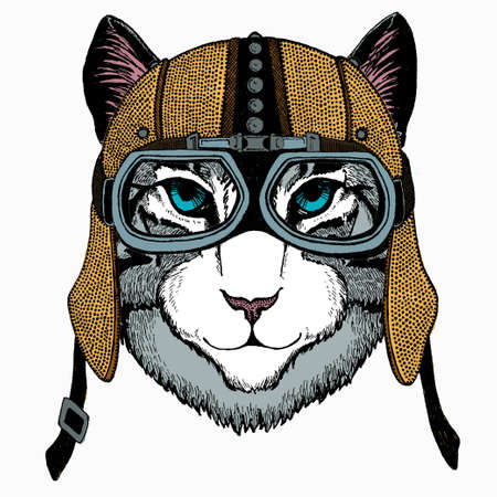 Cat head. Vector animal portrait. Face of kitten.