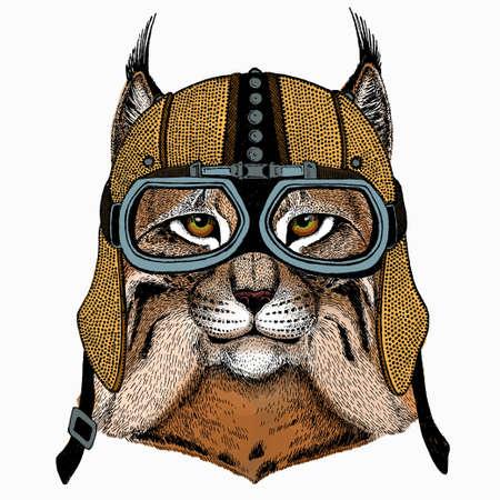 Lynx, bobcat. Wild cat. Vector portrait of cat head.