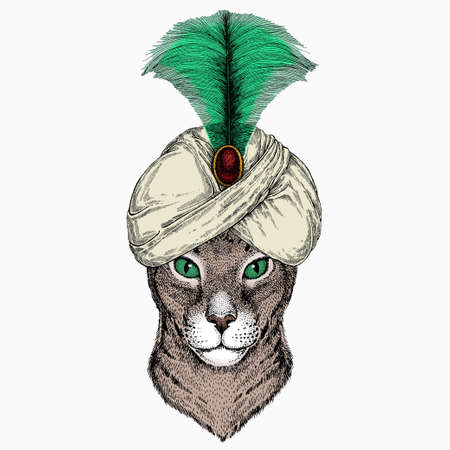 Oriental cat. Animal and wizard hat. Sorcerer and magican
