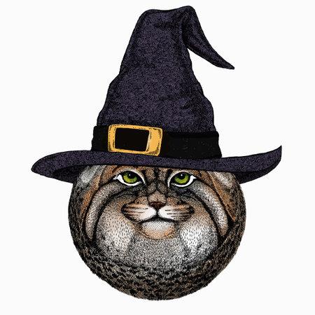 Pallass cat. Vector portrait, wild cat head, wild cat face. Ilustración de vector