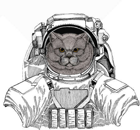 Wild astronaut animal in spacesuit. Deep space. Galaxy. British shorthair cat animal cute face. Vector happy silver British kitten head portrait. Ilustração