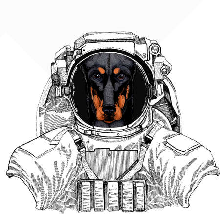 Wild astronaut animal in spacesuit. Deep space. Galaxy. Doberman portrait in a captain cap with sunglasses. Vector illustration.