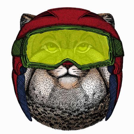 Pallass cat. Vector portrait, wild cat head, wild cat face.