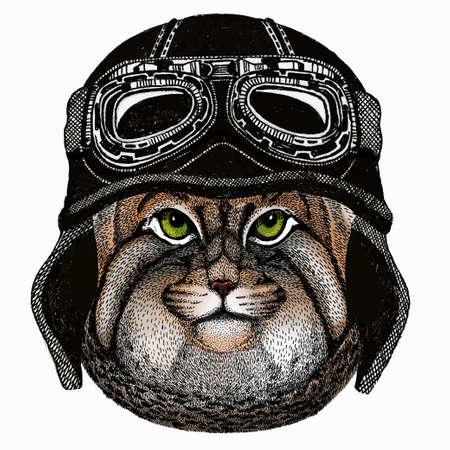 Pallass cat. Vector portrait, wild cat head, wild cat face. Vintage motorcycle biker helmet. Ilustración de vector