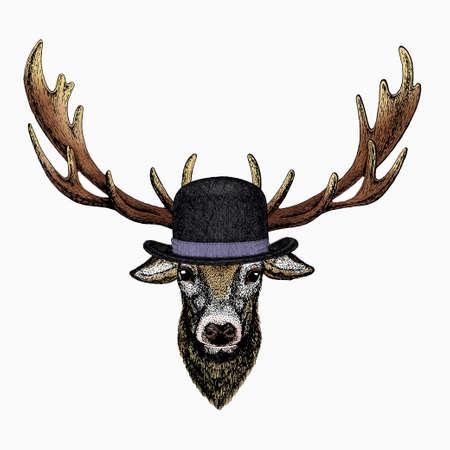 Vector portrait of deer. Woodland animal head.