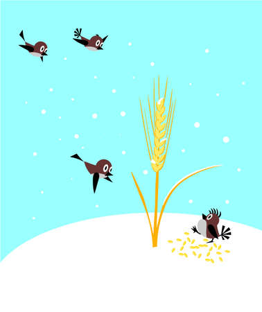 winter wheat: sparrow