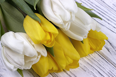Yellow and white spring tulips on white wooden background. Place for text. Womans day. 8 March Stock Photo