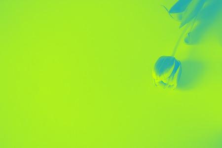 Green tulip flower duotone background texture gradient