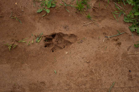 A paw print left in the sand by a large dog.