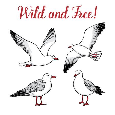 Set with seagulls on isolated white background Illustration