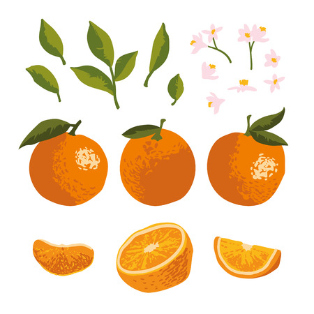 Vector summer pattern with oranges and flowers isolated on background