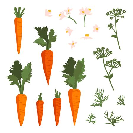 Vector summer set with carrots, flowers and leaves isolated on white background.