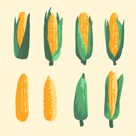 Vector summer set of sweet corns and leaves isolated on background
