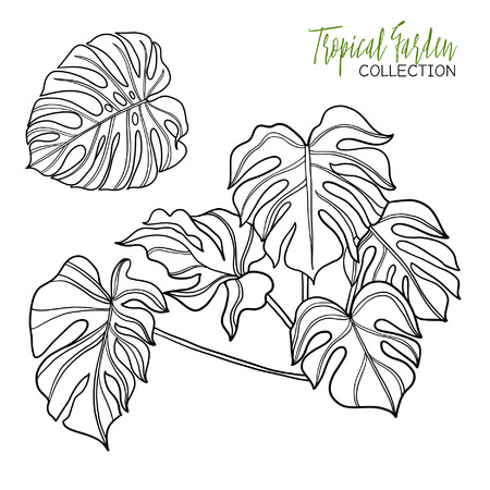 Monstera. Tropical plant. Vector illustration. Coloring book for adult and older children. Coloring page. Outline drawing. Vettoriali