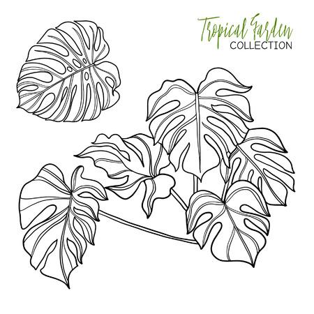 Tropische Pflanze Vektor Illustration Malbuch Für Erwachsene Und