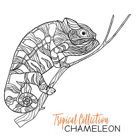 Vektor Illustration Von Chamäleon Mit Doodle Muster Ausmalbilder
