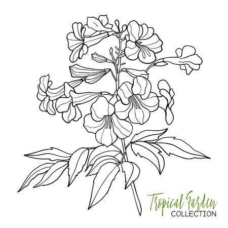 Tropische Pflanze. Vektor-Illustration. Malbuch Für Erwachsene Und ...