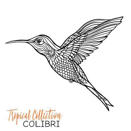 Colibri. Tropical bird. Vector illustration. Coloring book for adult and older children. Coloring page. Outline drawing.