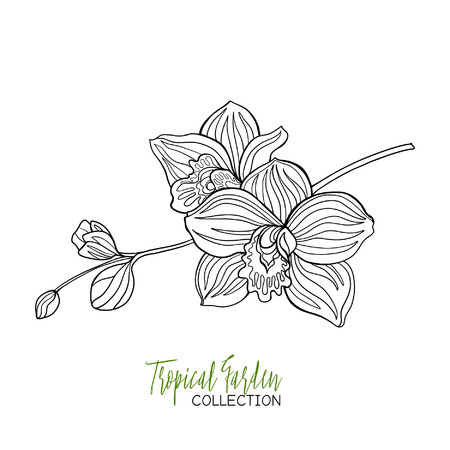 Orchid. Tropical plant. Vector illustration. Coloring book for adult and older children. Coloring page. Outline drawing.