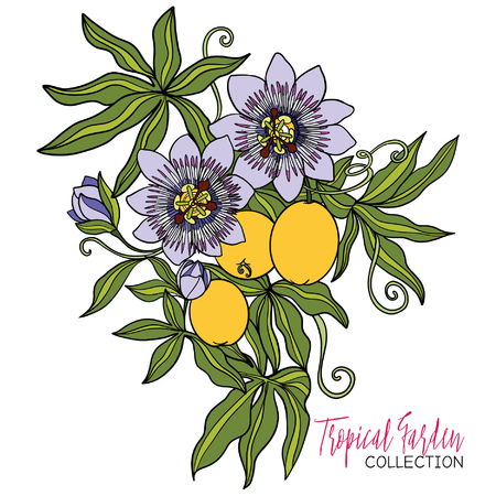 branches with leaves: Passiflora. Colored tropical plant. Vector illustration.