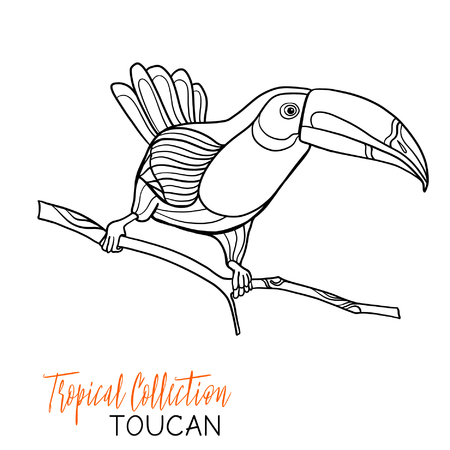 Toucan. Tropical bird. Vector illustration. Coloring book for adult and older children. Coloring page. Outline drawing.